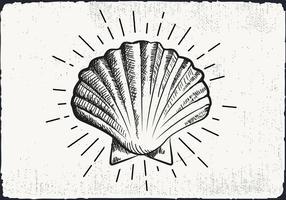 Free Hand fundo desenhado Shell vetor