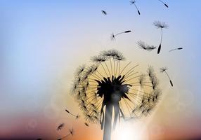 Dandelion bonito com fundo do por do sol vetor