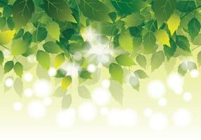 Natural verde deixa o fundo vetor