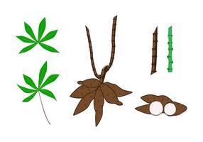 A mandioca planta Elemento Vectors