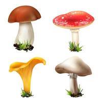 conjunto realista de cogumelos vetor
