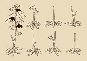 Hand Drawn Vector mandioca árvore grátis