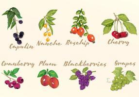 Frutas watercolor vetor