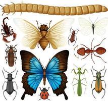 diferente coleção de insetos isolada vetor