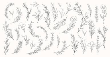 conjunto desenhado à mão planta natureza