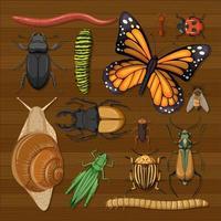 conjunto de diferentes insetos em papel de parede de madeira vetor