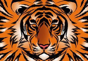 Listrado Bengal Tiger Vector