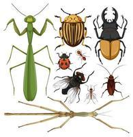 conjunto de bugs vetor