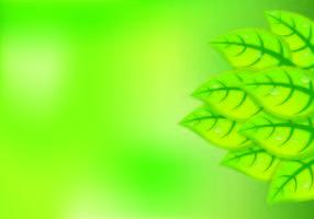 Fundo das folhas verdes naturais vetor