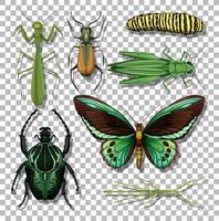conjunto de diferentes insetos isolados