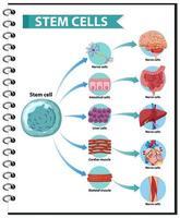 ilustração das aplicações de células-tronco humanas vetor