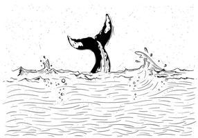 Livre ilustração da baleia Vector