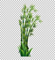 árvore de bambu verde vetor