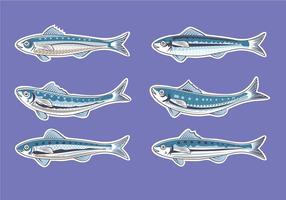 Ilustração para a Obra sardinha ou Pilchard Europeia vetor