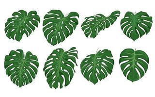 conjunto de folhas monstera, elementos verdes vetor