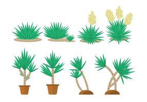 Livre Yucca plantas Colecções vetor