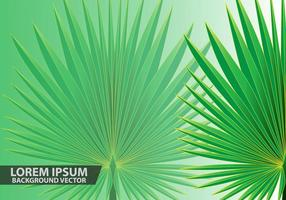Folhas de palmeira Vector Background