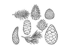 Pine Cones & Folha Vector