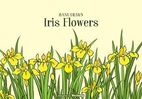 Hand Drawn fundo amarelo Iris Flowers vetor