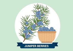 Juniper bagas Ilustração vetor