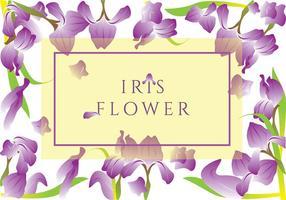Iris Flower Vector Cartão