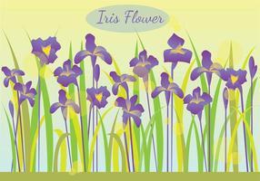 Flor da íris na ilustração Manhã vetor