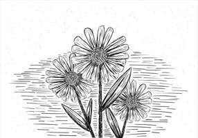 Mão livre desenhado ilustração da flor do vetor