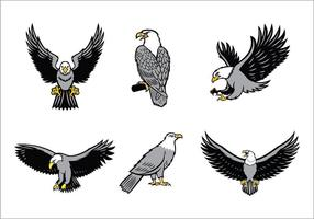 Eagles Mascote Vector Set