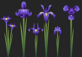 Jogo bonito da flor da íris vetor