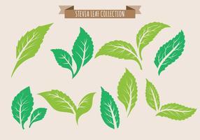 Coleção da folha do Stevia vetor