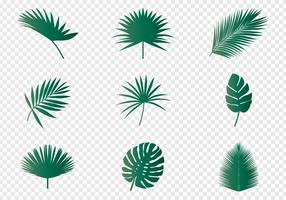 Folhas de palmeira vetor