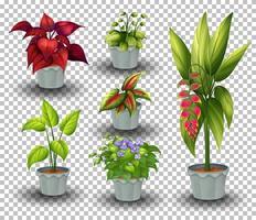 conjunto de plantas em vaso em fundo transparente vetor