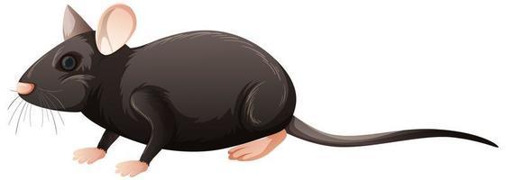 rato isolado em fundo branco vetor