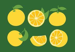 Ícones do vetor da clementina