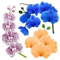 coleção colorida de flores de orquídeas realistas