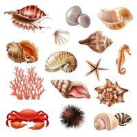conjunto realista de conchas vetor