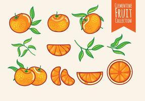 Conjunto, clementine, frutas vetor