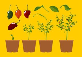 Vector livre de planta de habanero