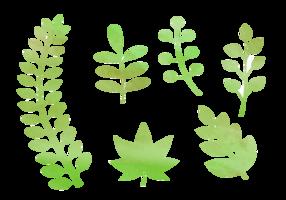 Elementos naturais da aguarela livre vetor