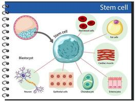 pôster de informações sobre células-tronco humanas vetor
