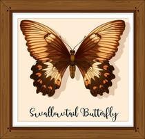borboleta em moldura de madeira