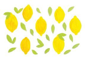 Limões desenhados a mão do vetor