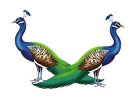 composição de pássaros pavão vetor