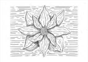 Ilustração desenhada mão da flor do vetor desenhada mão