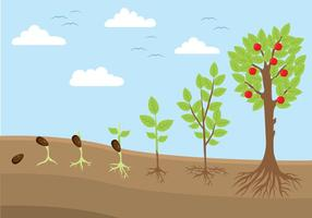 Ilustração do ciclo da vida vegetal vetor