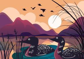 Loon Bird no Sunset Lake vetor