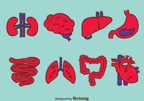 Vetores da coleção de órgãos humanos