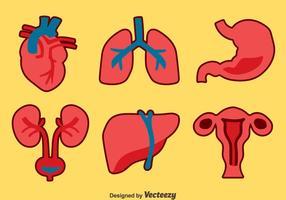 Conjunto de vetores da coleção de órgãos humanos