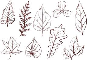 Vetores de folhas vintage gratuitos
