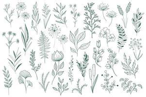 Conjunto de elementos decorativos florais desenhados à mão vetor